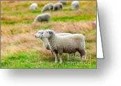 Mutton Greeting Cards - Sheeps Greeting Card by MotHaiBaPhoto Prints