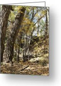 Colorado Photographers Greeting Cards - 10100837 Greeting Card by Theresa Baker