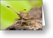 Antenna Greeting Cards - Bug Greeting Card by Andre Goncalves