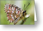 Antenna Greeting Cards - Butterfly Greeting Card by Andre Goncalves