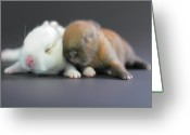 Domestic Greeting Cards - 11 Day Old Bunnies Greeting Card by Copyright Crezalyn Nerona Uratsuji