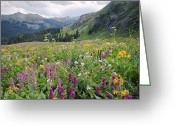 Biological Greeting Cards - Wildflower Meadow Greeting Card by Bob Gibbons