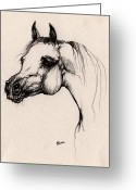 Grey Drawings Greeting Cards - The Arabian Horse Greeting Card by Angel  Tarantella