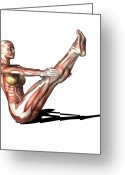 Athlete Greeting Cards - Female Muscles, Artwork Greeting Card by Friedrich Saurer