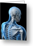 Upper Body Greeting Cards - Upper Body Bones, Artwork Greeting Card by Sciepro