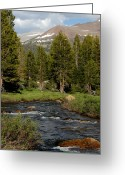 Yosemite Creek Greeting Cards - Mountains of Yosemite Greeting Card by LeeAnn McLaneGoetz McLaneGoetzStudioLLCcom