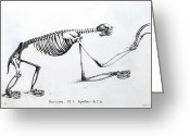 Mega Greeting Cards - 1812 Sloth Skeleton By Cuvier Greeting Card by Paul D Stewart