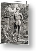 Intaglio Etching Greeting Cards - 18th Century Anatomical Engraving Greeting Card by Science Source