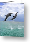 Jumping Greeting Cards - Delfin (grosser Tuemmler) Greeting Card by Tier Und Naturfotografie J und C Sohns
