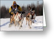 Team Greeting Cards - 2011 Limited North American Sled Dog Race Greeting Card by Gary Whitton