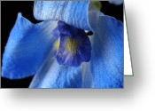 Blue Delphinium Greeting Cards - A Delphinium Delphinium Belladona Greeting Card by Joel Sartore