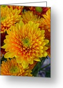 Flowery Greeting Cards - A New Day Greeting Card by Robert Harmon