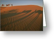 Ethnic Greeting Cards - A Tuareg Tribesman Leads His Camels Greeting Card by Carsten Peter