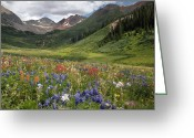 Rosy Greeting Cards - Alpine Flowers In Rustlers Gulch, Usa Greeting Card by Bob Gibbons