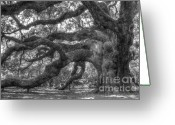 Leaves Photo Greeting Cards - Angel Oak Tree Charleston SC Greeting Card by Dustin K Ryan