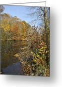 Somerset Greeting Cards - Autumn Colors on the Canal Greeting Card by David Letts