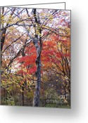 Red Autumn Trees Greeting Cards - Autumn Greeting Card by Eena Bo