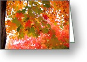 Photographic Art Greeting Cards - Autumn Leaves Greeting Card by Rona Black