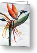 Abstract Design Drawings Greeting Cards - Bird of Paradise Greeting Card by Mindy Newman
