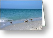 Boca Grande Prints Greeting Cards - Birds on Beach Greeting Card by Geralyn Palmer