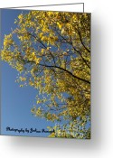 True Colors Greeting Cards - Blue Sky Greeting Card by Joshua Fronczak