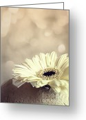 Daisies Photos Greeting Cards - Bokeh Greeting Card by Kristin Kreet