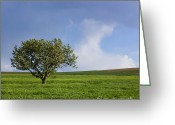 Cornfield Greeting Cards - Cherry tree Greeting Card by Bernard Jaubert
