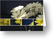 Northwest Flowers Greeting Cards - Daisys Greeting Card by Cathie Tyler