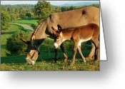 Burro Greeting Cards - Donkey with Foal Greeting Card by Thomas R Fletcher