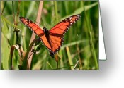 Wild-life Greeting Cards - Drying My Wings Greeting Card by Robert Pearson