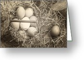 Old Barn Greeting Cards - Eggs Greeting Card by Joana Kruse