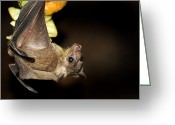 Bat Greeting Cards - Egyptian Rousette Bat Greeting Card by Victor Habbick Visions