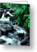 Puerto Rico Greeting Cards - El Yunque Waterfall Greeting Card by Thomas R Fletcher