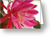 Night Blooming Greeting Cards - Epiphyllum Greeting Card by Ellen Henneke