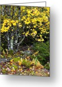 Winding Road Greeting Cards - Fall color Highland Scenic Highway Greeting Card by Thomas R Fletcher