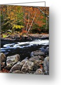 National Greeting Cards - Fall forest and river landscape Greeting Card by Elena Elisseeva