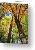 Colors Greeting Cards - Fall forest Greeting Card by Elena Elisseeva
