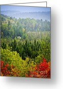 North Greeting Cards - Fall forest rain storm Greeting Card by Elena Elisseeva