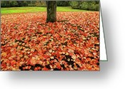 Scenary Greeting Cards - Fallen Leaves Greeting Card by Steven  Michael