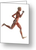 Runner Photo Greeting Cards - Female Muscles, Artwork Greeting Card by Sciepro