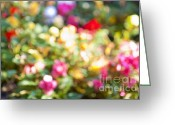Colorful Roses Greeting Cards - Flower garden in sunshine Greeting Card by Elena Elisseeva