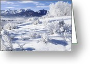 Mountainous Greeting Cards - Frosted Trees in Ogden Valley Utah Greeting Card by Utah Images