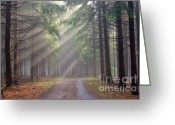 Path Greeting Cards - God beams - coniferous forest in fog Greeting Card by Michal Boubin