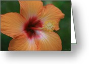 Flowers Of Nature Greeting Cards - Gods Garden Greeting Card by Sharon Mau