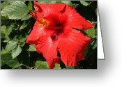 Great Painting Greeting Cards - Great Red Hibiscus 1 Greeting Card by Ellen Henneke