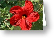 Great Painting Greeting Cards - Great Red Hibiscus 2 Greeting Card by Ellen Henneke