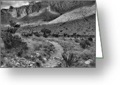 "\""guadalupe National Park\\\"" Greeting Cards - High Desert Morning Greeting Card by Stephen  Vecchiotti"
