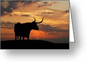 Longhorns Greeting Cards - Into The Sunset Greeting Card by Robert Anschutz