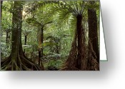 Rain Forest Greeting Cards - Jungle Greeting Card by Les Cunliffe