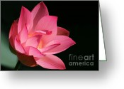 Florida Flowers Greeting Cards - Lotus Diva Greeting Card by Sabrina L Ryan